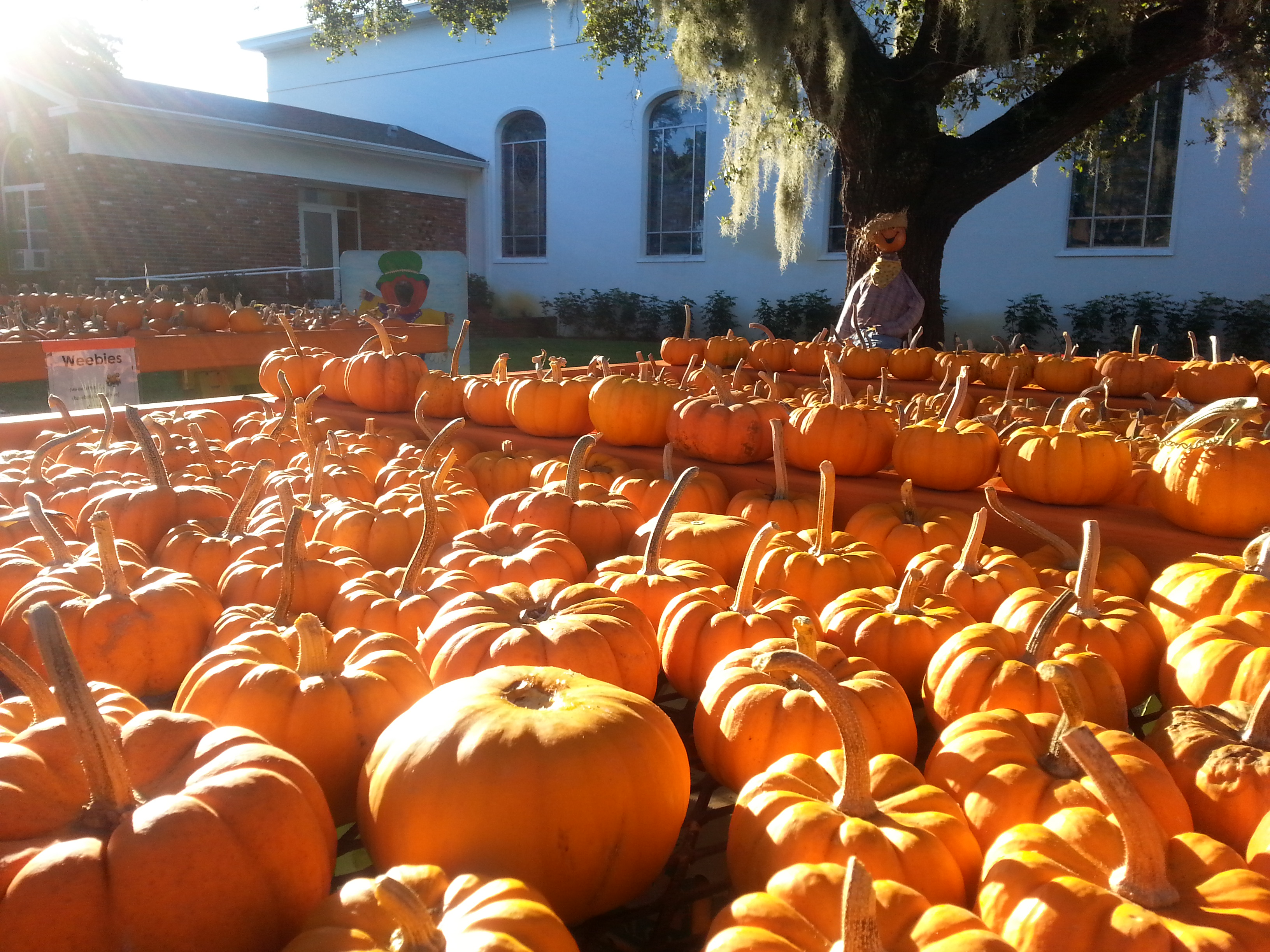many events will feature a pumpkin patch kids area a corn maze safe trick or treating hayrides live bands lots of arts and craft vendors - Halloween Events In Broward