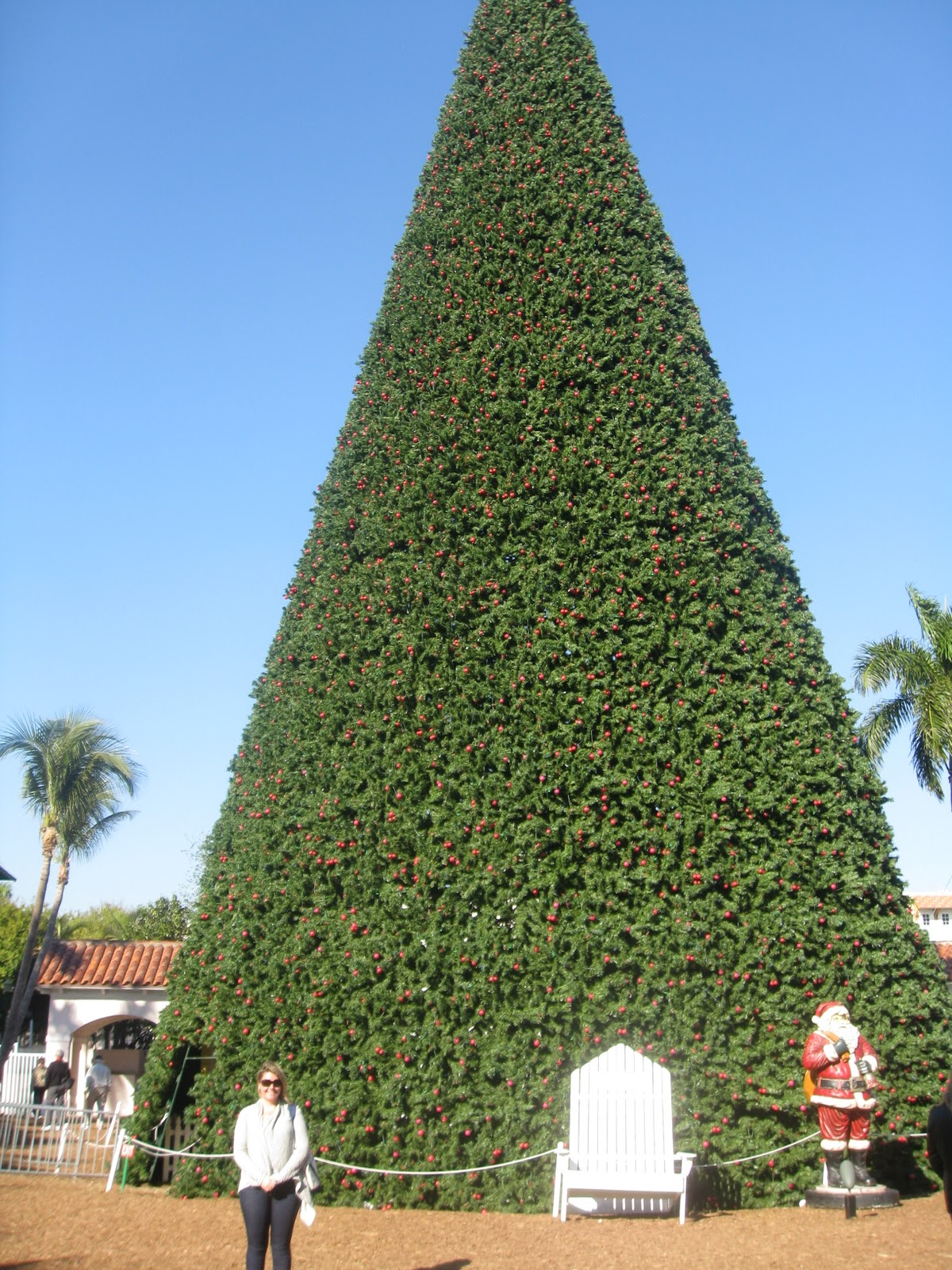 100 Foot Tree Delray Beach | South Florida Finds