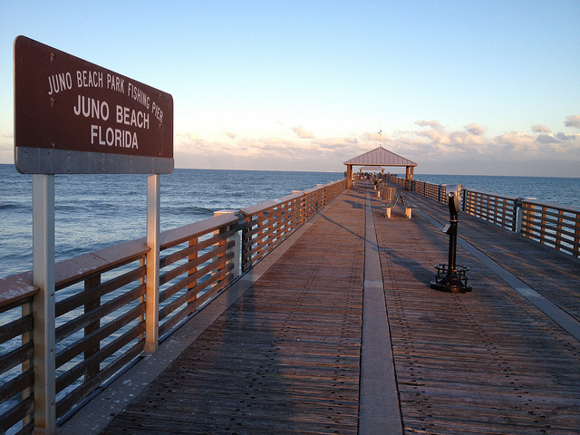 Pier fishing program south florida finds for Juno beach fishing pier