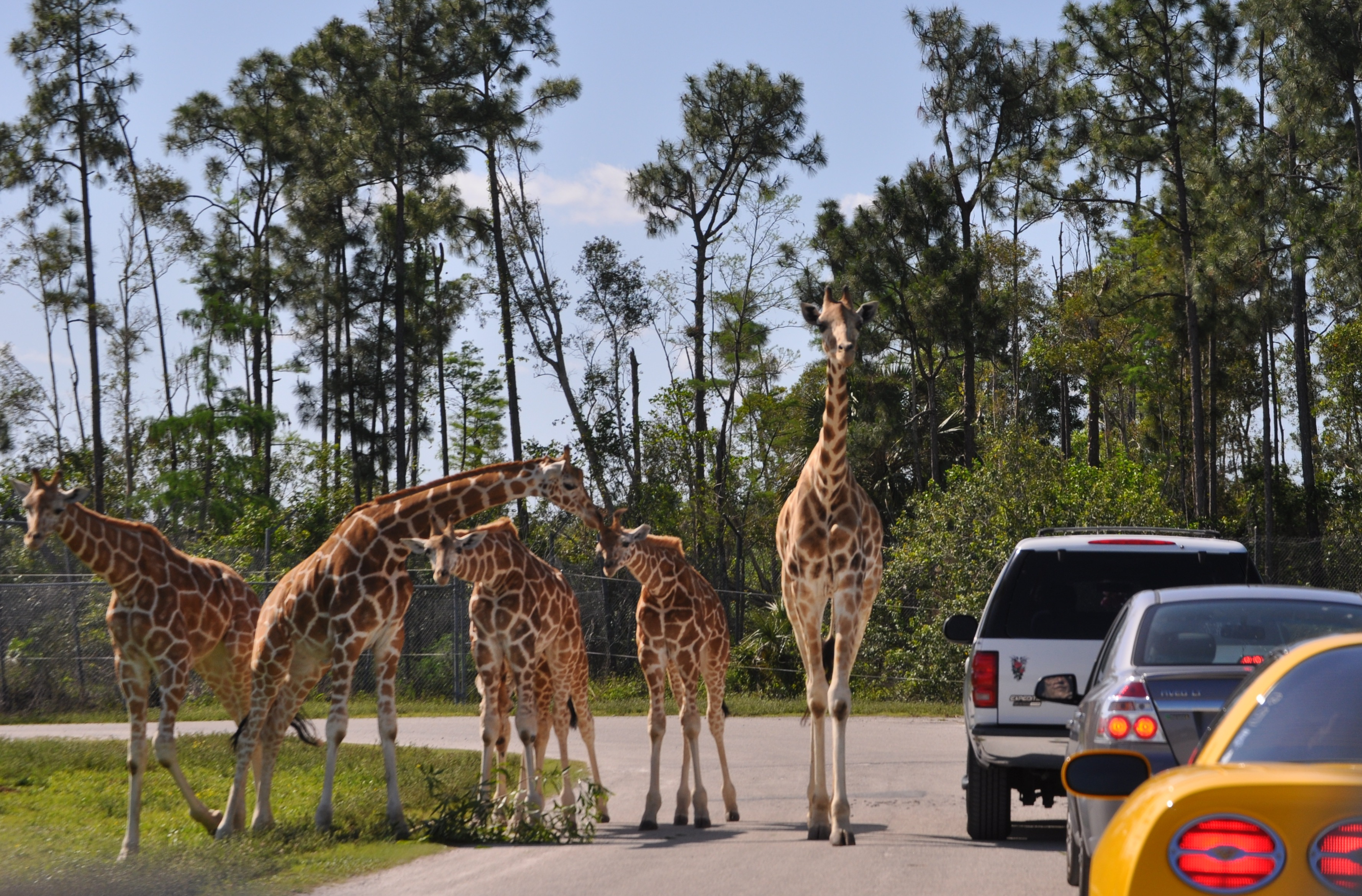 Palm beach zoo coupons discounts