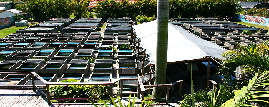 Tropical fish miami south florida finds for Fish farms in florida